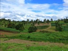 #LandforSaleinFiji is one of the best view lots available. The land is surrounded by the coconut tree farm and papaya farm. Read more... http://thefiji-life.blogspot.com/2015/05/Private-Villas-Fiji.html?spref=pi