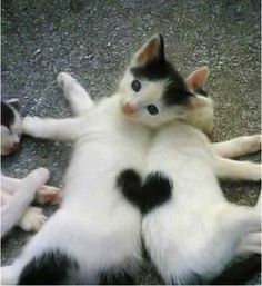 Funny photos, perfectly timed photos, kitten heart fur
