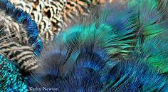 Newton Photo, Cincinnati Zoo, Bird Feathers, Pet Birds, Pets, Animals, Beautiful, Animales, Animaux