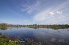 Train Crossing at Cosumnes River Preserve