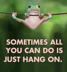 Hang in there frog life, funny animals, true quotes, best quotes, motivational Cute Quotes, Great Quotes, Funny Quotes, Funny Memes, Fun Sayings, Memes Humor, Quotes For Pics, Morning Humor Quotes, Monday Morning Humor