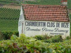 Les nouvelles façons d'investir dans le vin