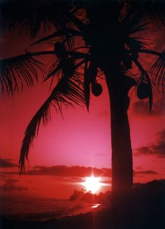 Kauai Coconuts, Kapaa Beach, Kauai, Hawaii
