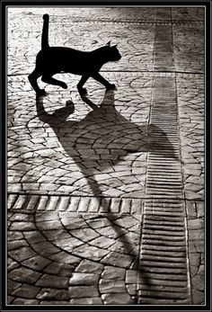 There's something very intriguing about shadows - our soul's reflection dancing alongside us across the pavement or up the walls. I feel a great urge to capture shadows with my camera - just need some sun...