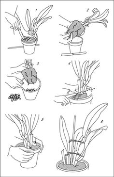 Repot your orchid for improved growing space and drainage.