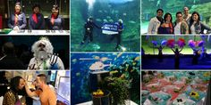 Welcome to a New World: Enchanted evening hosted by The Diamond Works, Two Oceans Aquarium & NAC Helicopters Ocean Aquarium, Enchanted Evening, Helicopters, Oceans, Have Fun, Events, Diamond, World, Painting