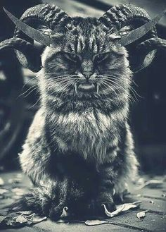 Rare Cat Breed! \m/ not cute..... Wtf.... devil cat