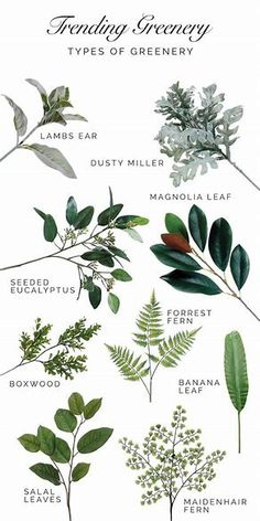 Image result for christmas greenery types