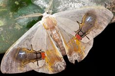 IMAGE: https://farm4.staticflickr.com/3690/13140404565_f9648fceaa_b.jpg Moth with fly-like image on wings
