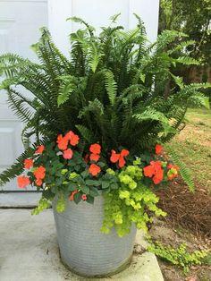 Instead of impatiens use dark leaf big begonias..