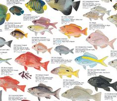 Coastal Fishes of Southern Africa - 3: Coral & Rocky Reefs