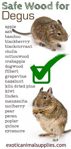 Safe wood for degus. These degu safe woods are perfect for making cages, toys, and chews for your pet goo. Keep them safe and let them chew.