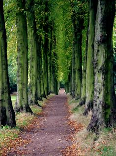 Lady Lucy's Walk at Wentworth Castle, South Yorkshire, England