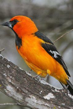 Free download of this photo: https://www.pexels.com/photo/animal-avian-beak-bird-208948/ #wood #nature #bird