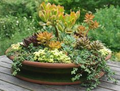 A beautiful container garden