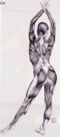 Human Anatomy by Rey Bustos