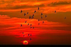 Quiet Birds in Circled Flight