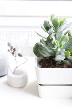 muotoseikka\ Jos kasvilla olisi sielu / If a plant had a soul