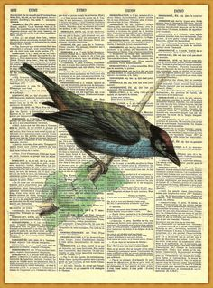 bird on dictionary page