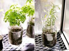 Kids DIY Crafts - Help Your Little Ones Become Indoor Gardeners