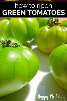 If you're growing tomatoes in your garden and you're getting an early frost, you may be wondering what to do? Learn how to ripen green tomatoes indoors the best way with this easy method. This old gardening trick will give you juicy red tomatoes to enjoy in your favorite recipes. #gardeningtips #greentomatoes #gardening #tomatoes #gardener #ripeningtomatoes #homesteading #tomatogrowingtips #gardeningideas #homesteader #homemaking #garden #howto #diy #lifehacks Growing Tomatoes, Healthy Life, Healthy Living, Healthy Food, Organic Gardening, Gardening Tips, Soil Improvement, Red Tomato
