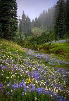 Misty Valley, near Mount Ranier Washington State. flower field with pine trees Beautiful World, Beautiful Places, Beautiful Pictures, Beautiful Scenery, Nature Aesthetic, Aesthetic Vintage, Flower Aesthetic, Purple Aesthetic, Belle Photo