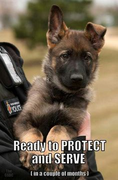 Police K-9 in the making....too cute!