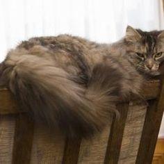 Home-Prepared Diet for Feline Kidney Failure