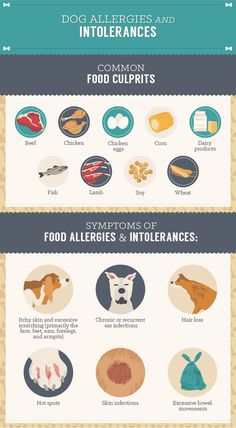 Homemade Dog Treats - Dog Allergies and Intolerances