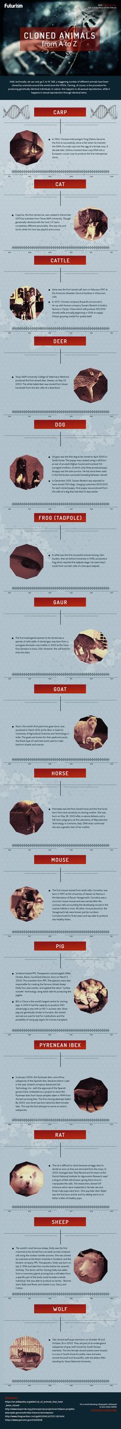 Seeing Double: The History of Animal Cloning — You've heard of Dolly the Sheep. She was heralded as the first cloned mammal; however, that claim isn't technically true.  — https://futurism.com/images/seeing-double-the-history-of-cloning/