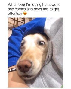 Funny Animal Memes, Funny Animal Videos, Dog Memes, Funny Animal Pictures, Videos Funny, Cute Funny Dogs, Cute Funny Animals, Funny Cats, Cute Dogs And Puppies