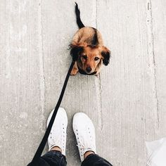 Image about cute in animals by 𝙢𝙤𝙤𝙣𝙧𝙞𝙨𝙚 🌧 on We Heart It Puppies And Kitties, Cute Puppies, Cute Dogs, I Love Dogs, Doggies, Animals And Pets, Baby Animals, Cute Animals, Paws And Claws