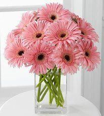 Love the daisies
