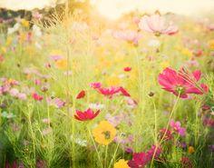 Fine art photography Peony flower vase image by JennDiGuglielmo