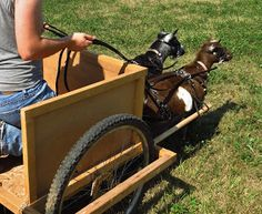 The Thrifty Homesteader: Working Goats: Putting the Cart before the Goat
