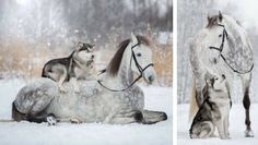 dog and horse friendship feat (1)
