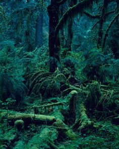 dreaming the deep, the green, the primordial