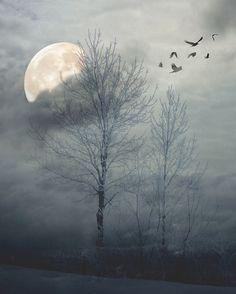 Moon & trees