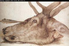 """""""Head of a Stag Shot With An Arrow"""" - Albrecht Dürer Albrecht Durer, Kaiser Maximilian, List Of Paintings, Hokusai, High Art, Chiaroscuro, Italian Artist, Rembrandt, Animal Drawings"""