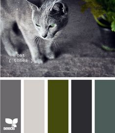 Living room, bedroom, dining room (dark gray, winter white, olive, dark gray-blue, slate gray)