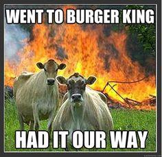evil cow meme
