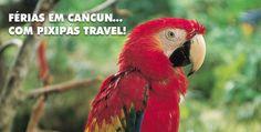 PIXIPÁS TRAVEL - Su receptivo en Cancun, seu receptivo em Cancun - Mexico www.pixipastravel.com