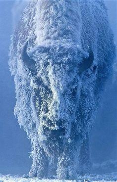 Wildlife Photography, Animal Photography, Beautiful Creatures, Animals Beautiful, Beautiful Images, Tom Murphy, Animals And Pets, Cute Animals, Wild Animals