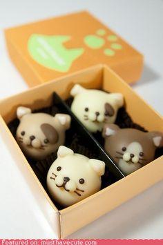 oh my god, kitty chocolates, i almost wouldn't wanna eat them. ha, who am i kidding.