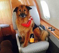 17 Celebrity Kids And Some Dogs On Private Jets Just To Make You Hate Your Life