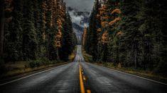 HD wallpaper: road, nature, tree, woody plant, forest, sky, lane, asphalt