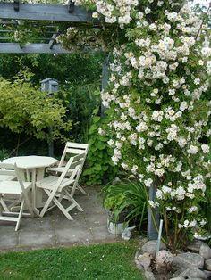 Trädgårdsdrömmar.: Rosor...Roses..