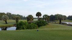 Palm course Disney World