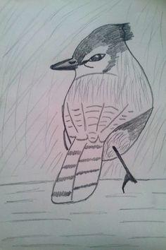 My blue jay bird drawing by me Jade Hurdle