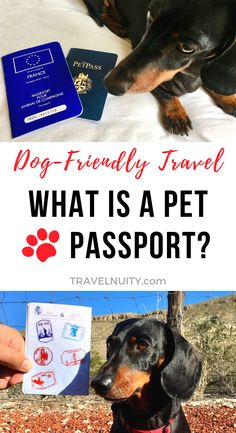 What is a Pet Passport? - Travelnuity What is a Pet Passport? – Travelnuity While you need a passport to travel overseas, the situati Dog Friendly Hotels, Pet Friendly Accommodation, Cat Care Tips, Dog Care, Pet Tips, Dog Travel, Travel Usa, Passport Travel, Family Travel